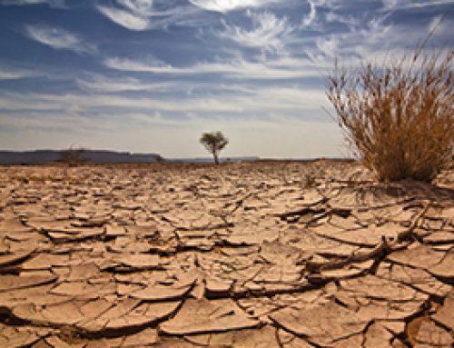 Adaptaciones morfológicas y fisiológicas contra el estrés hídrico